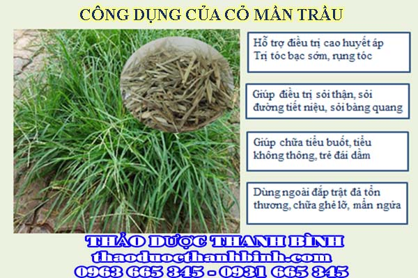 Địa chỉ công ty bán cỏ mần trầu tại Bình Định gần nhất