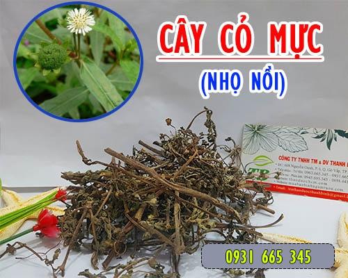 Công dụng và cách dùng cây cỏ mực trị bệnh