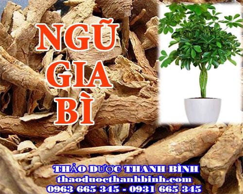 Địa điểm cung cấp ngũ gia bì tại Bắc Ninh uy tín chất lượng