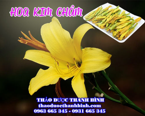 Hoa Kim Châm