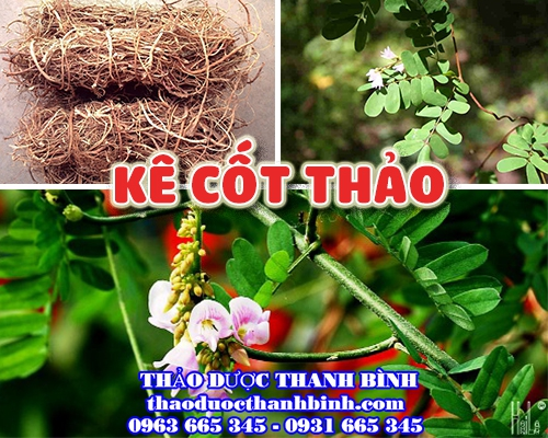 Mua bán kê cốt thảo tại Lạng Sơn giúp thải độc gan điều trị xơ gan