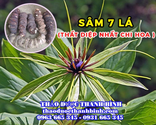 Mua bán sâm 7 lá - Thất diệp nhất chi hoa tại Kom Tum giúp giải độc chống ung thư