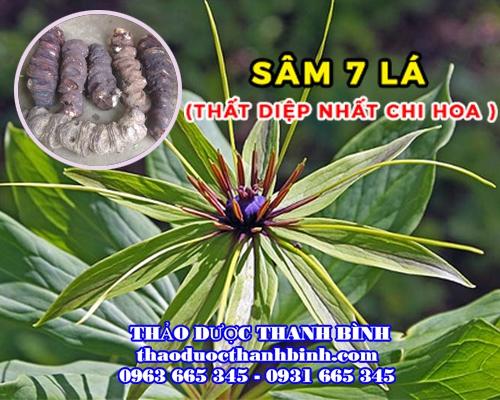 Mua bán sâm 7 lá - Thất diệp nhất chi hoa tại Phú Yên điều trị ung nhọt áp xe vú