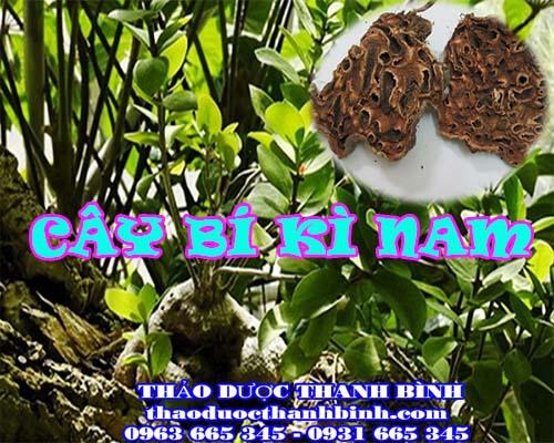 Mua bán sỉ và lẻ cây bí kì nam tại Bình Dương giá tốt nhất