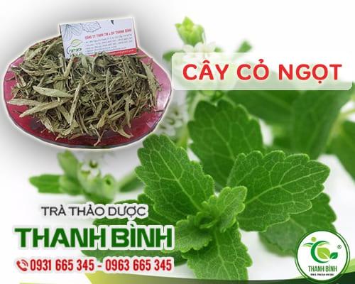 Tác dụng của cây cỏ ngọt - Vị thuốc quý chữa tiểu đường