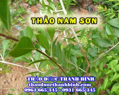 Thảo Nam Sơn