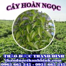 Cửa hàng bán cây hoàn ngọc tại Điện Biên giúp điều trị rối loạn dạ dày chống cảm cúm
