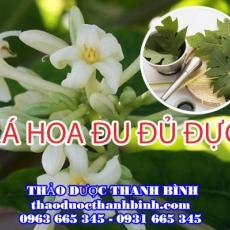 Cửa hàng bán lá hoa đu đủ đực tại Bình Định chữa bệnh ung thư ác tính tốt nhất