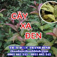 Địa chỉ công ty bán cây xạ đen tại Bình Định gần nhất