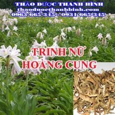 Địa chỉ công ty bán trinh nữ hoàng cung tại Bắc Giang gần nhất