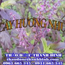 Địa chỉ mua bán cây hương nhu tại Đồng Nai giá tốt nhất