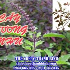 Địa chỉ mua bán cây hương nhu tại Đồng Nai uy tín chất lượng