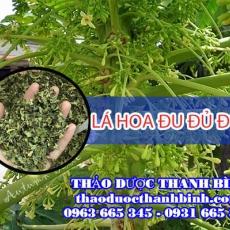 Địa chỉ mua bán lá hoa đu đủ đực tại Bình Định giá tốt nhất