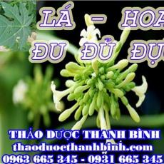 Địa chỉ mua bán lá hoa đu đủ đực tại Bình Định uy tín chất lượng