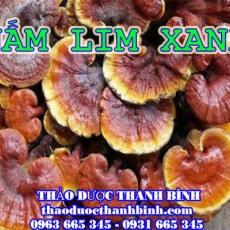 Địa chỉ mua bán nấm lim xanh tại Cao Bằng uy tín chất lượng