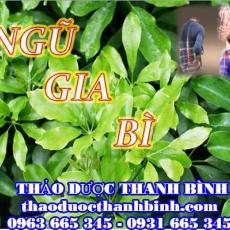 Địa chỉ mua bán ngũ gia bì tại Bắc Ninh uy tín chất lượng