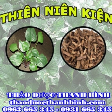 Địa chỉ mua bán thiên niên kiện tại Bình Thuận giá tốt nhất
