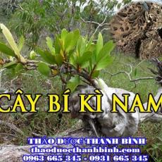Địa điểm cung cấp cây bí kì nam tại Bình Dương uy tín chất lượng