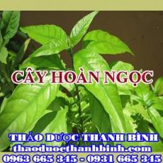 Địa điểm cung cấp cây hoàn ngọc tại Điện Biên uy tín chất lượng