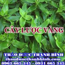 Địa điểm cung cấp cây lược vàng tại Điện Biên uy tín chất lượng
