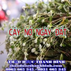 Địa điểm cung cấp cây nở ngày đất tại Cà Mau uy tín chất lượng