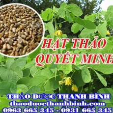 Địa điểm cung cấp hạt thảo quyết minh tại Hà Nội uy tín chất lượng