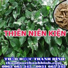 Địa điểm cung cấp thiên niên kiện tại Bình Thuận uy tín chất lượng