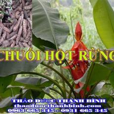 Mua bán chuối hột rừng tại Bà Rịa - Vũng Tàu uy tín chất lượng nhất
