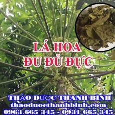 Mua bán lá hoa đu đủ đực tại Bình Định uy tín chất lượng nhất