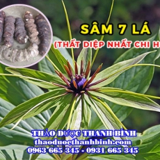 Mua bán sâm 7 lá - Thất diệp nhất chi hoa tại Vĩnh Phúc điều trị mụn nhọt kháng khuẩn