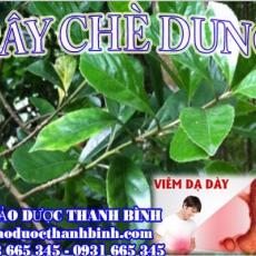 Mua bán sỉ và lẻ cây chè dung tại Bắc Giang giá tốt nhất
