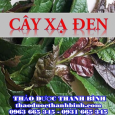 Mua bán sỉ và lẻ cây xạ đen tại Bình Định giá tốt nhất