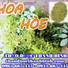 Mua bán sỉ và lẻ hoa hòe tại Bình Thuận giá tốt nhất