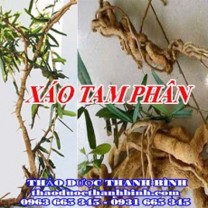 Mua bán xáo tam phân tại Bắc Ninh giúp trị xương khớp nhức mỏi hiệu quả